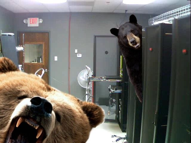 My resolution is to reduce the outbreak of bears in the data center by 30% this year. Meraki is like bear repellent and makes my life easier.