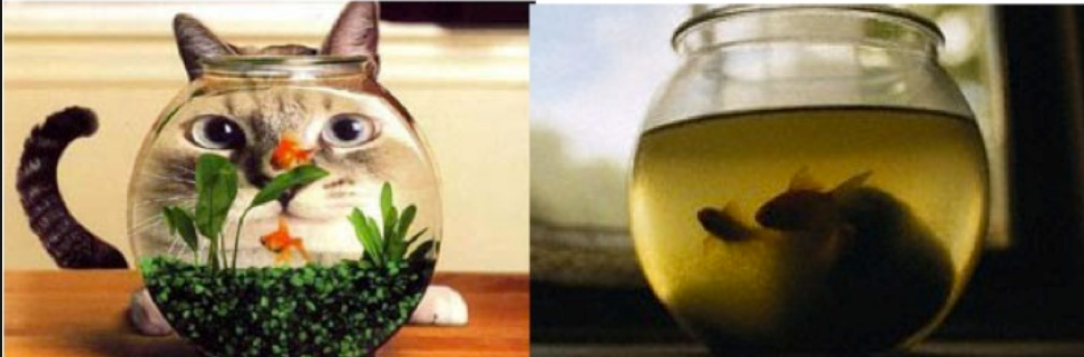 fishbowl.PNG