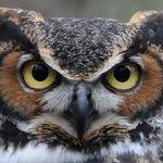 Cyber_Owl